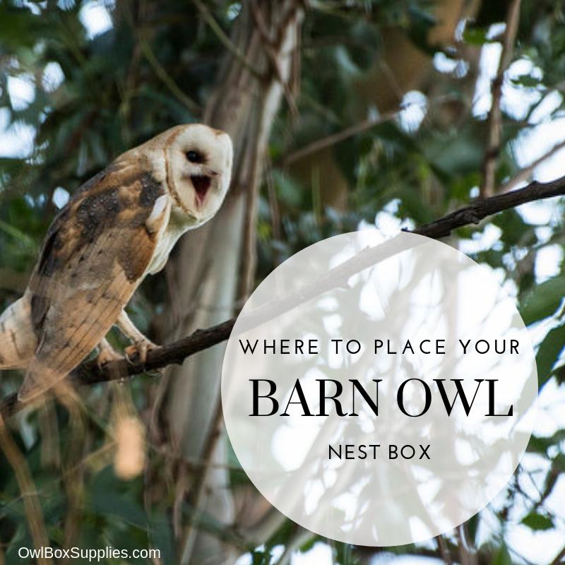 Barn Owl Poly Nest Box Large House